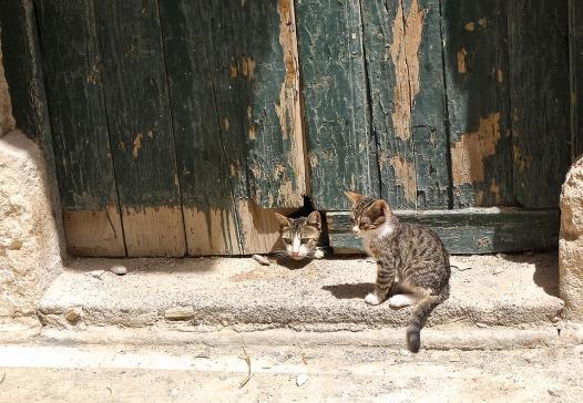 cat-1614894_960_720