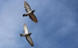 pigeons-2326719_960_720