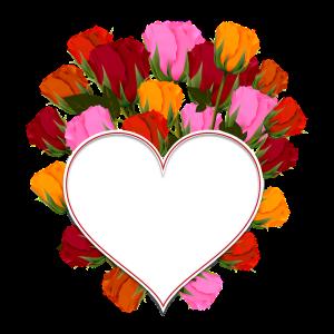 rose-2452411_960_720