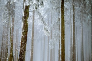 forest-2964073_960_720