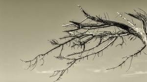 tree-3199003_960_720
