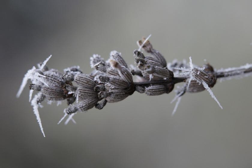 lavender-1891351_960_720.jpg