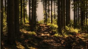 trees-3410846_960_720